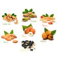 Fresh nuts set vector image vector image