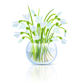 Snowdrop Flower vector image