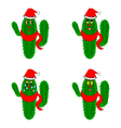 Funny christmas cacti on a whte background vector image