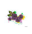 dewberry with colorful splashes vector image