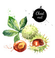 Hand drawn watercolor painting of chestnut vector image vector image