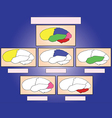 The brain sections vector image