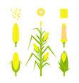 set yellow corn in flat style isolated on vector image