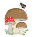 Wild Mushrooms vector image vector image
