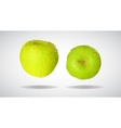 low poly green apple vector image
