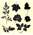 Plants silhouettes Vector Image