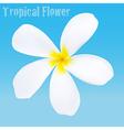 Frangipani tropical flower vector image