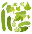 Fresh cucumber set vector image