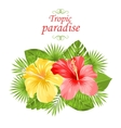 Beautiful Colorful Hibiscus Flowers Blossom and vector image