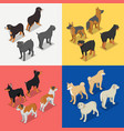 isometric dog breeds with rottweiler retriever vector image