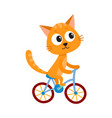cute little cat kitten character riding bicycle vector image
