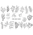 Set of flowers and herbs vector image