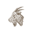 Goat head abstract isolated vector image