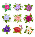 decorative nature flower set vector image