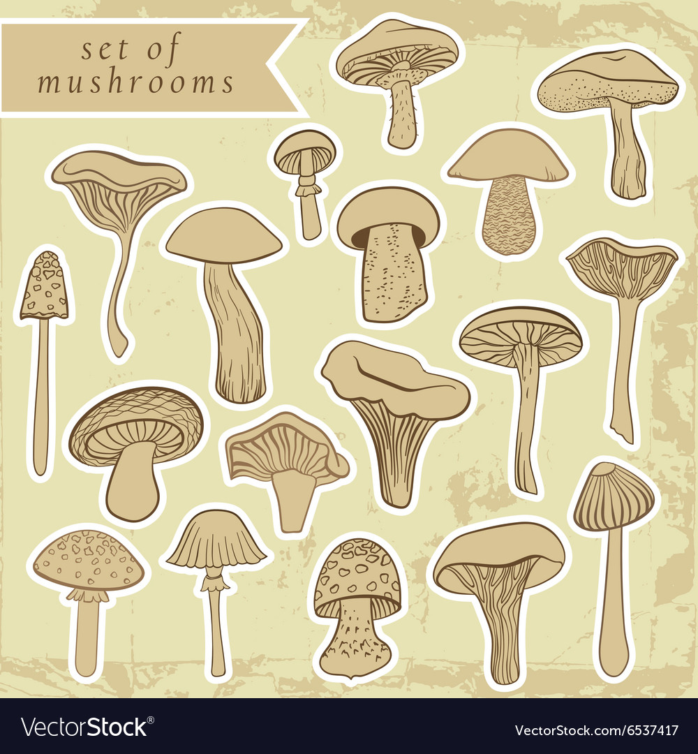 Vintage set of different hand drawn mushrooms in vector