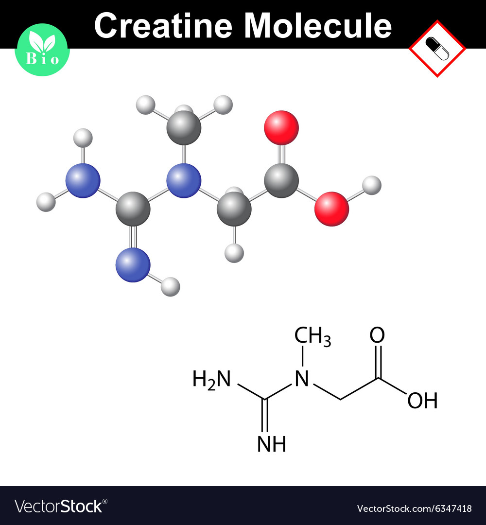 Creatine chemical formula and model vector