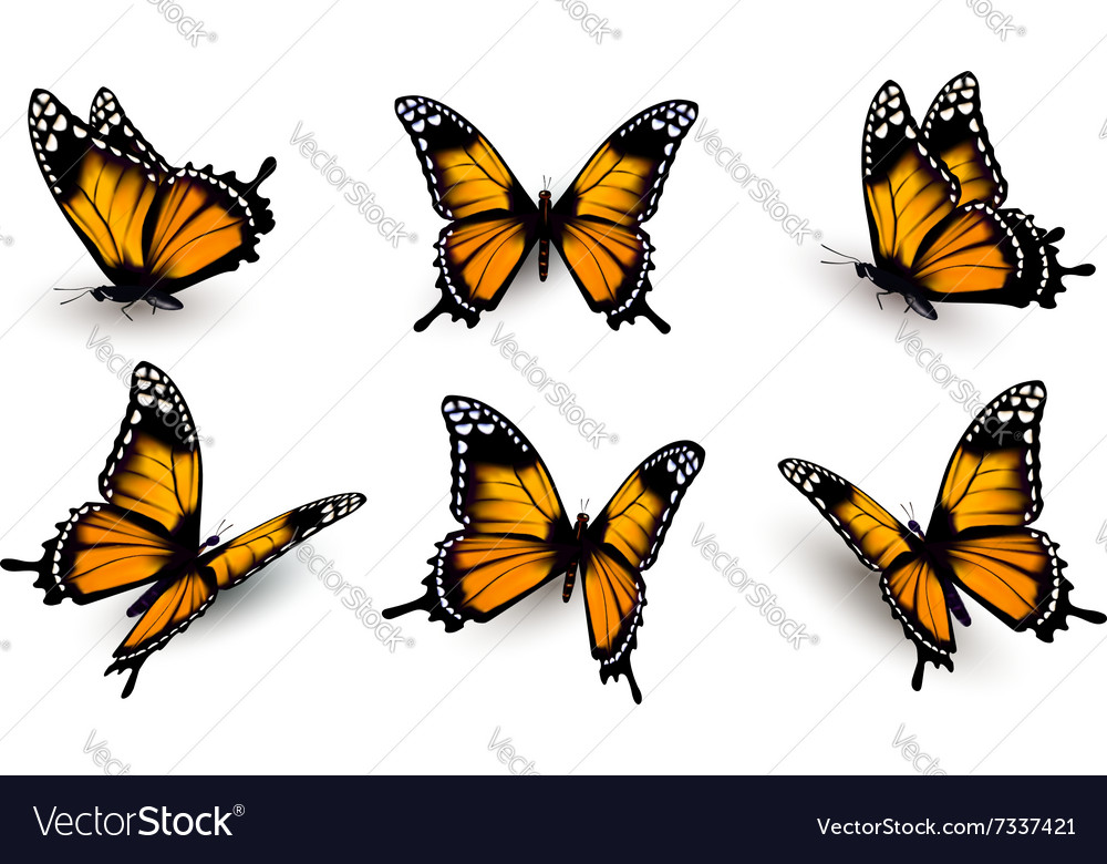 Six butterflies set vector