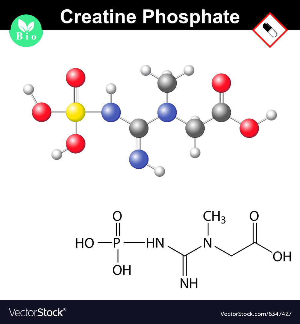 Phosphocreatine molecule  creatine phosphate vector