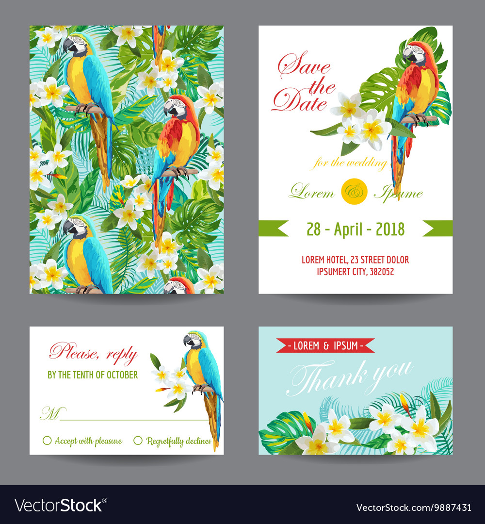 Invitation or greeting card set  tropical birds vector