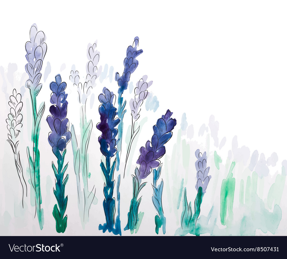 Watercolor pattern of lavender flowers vector