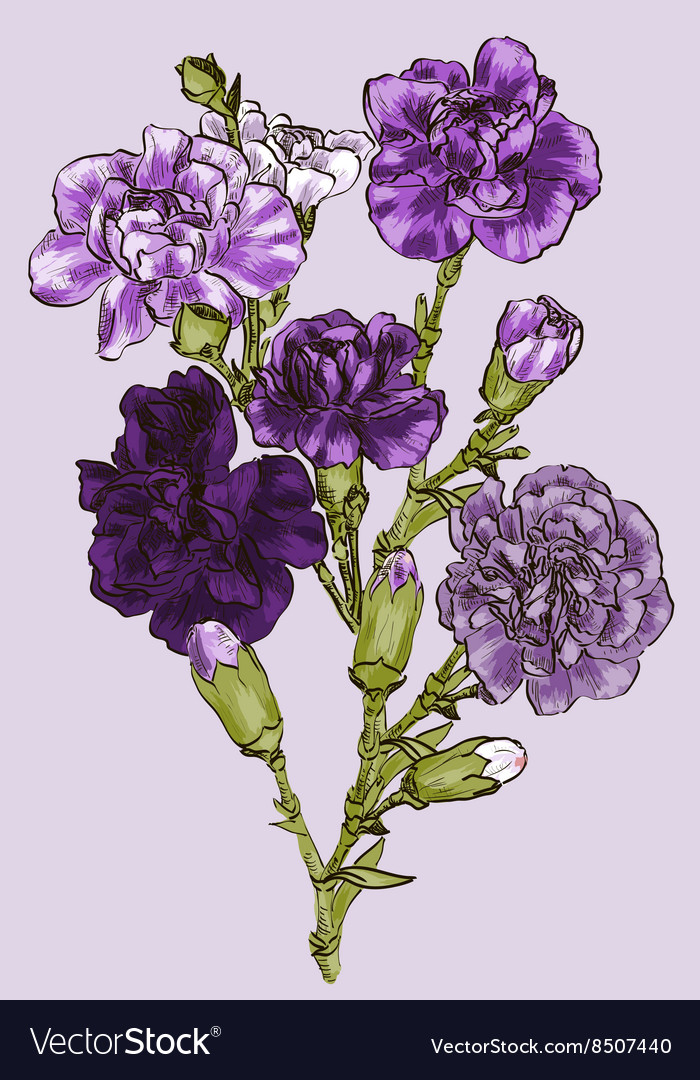Purple sketch of a carnation vector