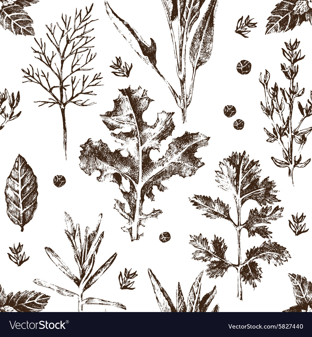 Seamless pattern with hand drawn herbs and spices vector