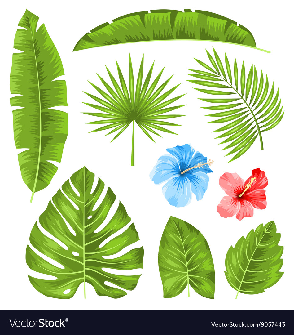 Set of tropical leaves collection plants isolated vector