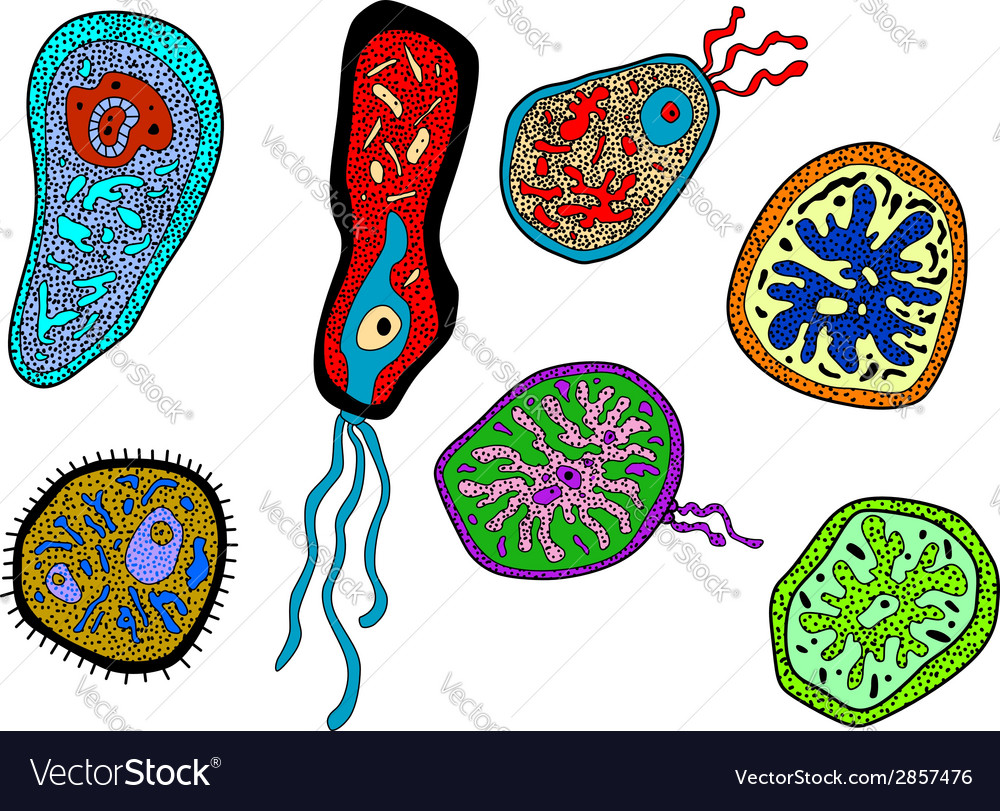 Colorful amebas amoebas microbes and germs set vector