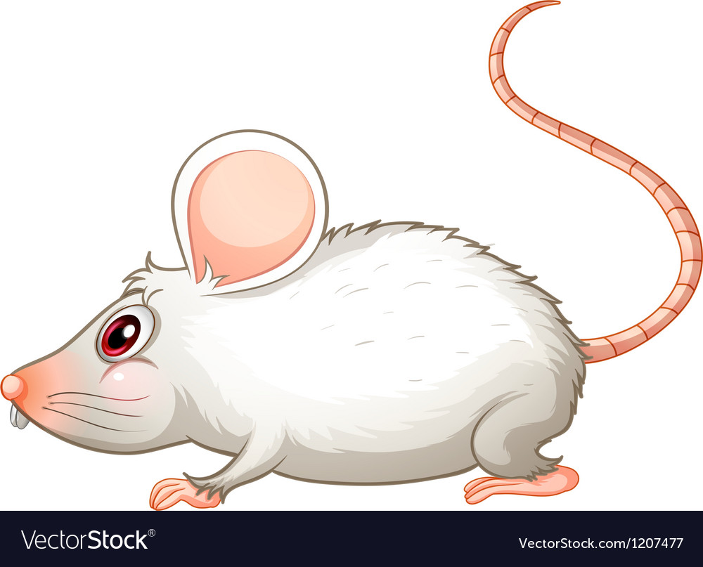 A white mouse vector