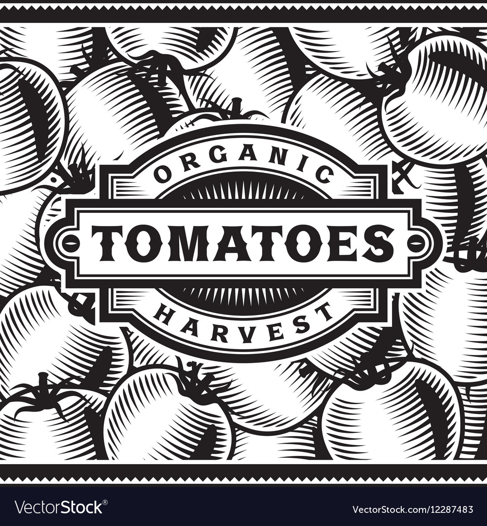 Retro tomato harvest label black and white vector