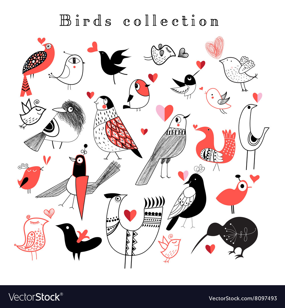 Graphic set of different birds vector