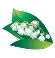 bellflower vector image