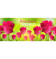 pink roses background realistic flowers and green vector image