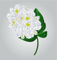 Twig white rhododendron mountain shrub vector image