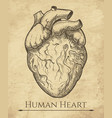 human heart retro sketch vector image