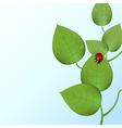funky ladybug vector image vector image