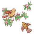 birds set 380 vector image vector image