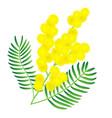 yellow mimosa flower vector image