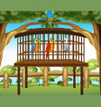 macaw parrots in wooden cage vector image vector image