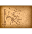 flower on the brown paper vector image