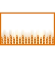 white background with wheat ears vector image