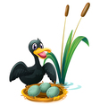 A duck near the nest with eggs vector image vector image