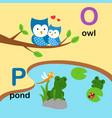 alphabet letter o-owl p-pond vector image