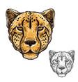 cheetah muzzle african wild animal icon vector image vector image