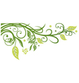 Leaves tendril spring vector image vector image