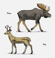 moose or eurasian elk and stag or deer hand drawn vector image