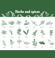 herbs and spices set hand drawn vector image