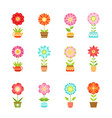 flowers in different pots floral set vector image