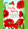 poppy flowers for spring time holidays vector image