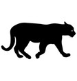 silhouette beautiful panther on a white background vector image